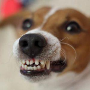 """Refranes populares – """"Perro que ladra no muerde"""""""